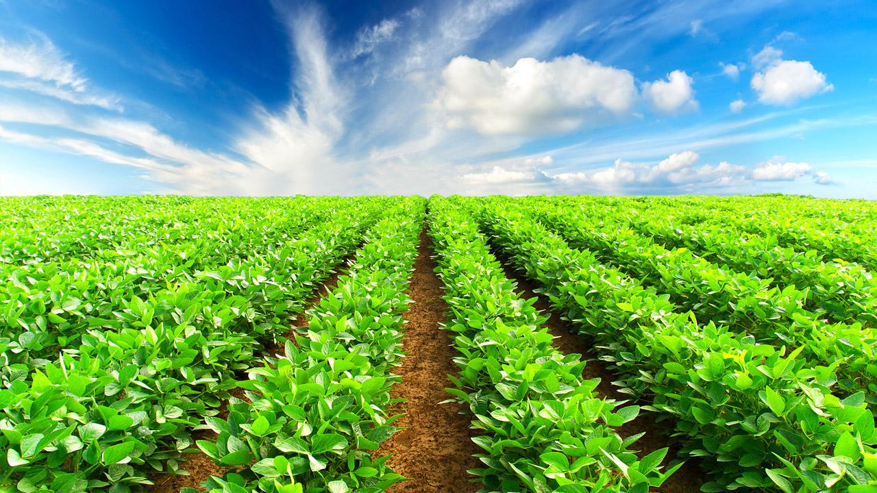 در جلسه کمیسیون کشاورزی اتاق بازرگانی استان مطرح شد: تاسیس بورس منطقه ای محصولات کشاورزی