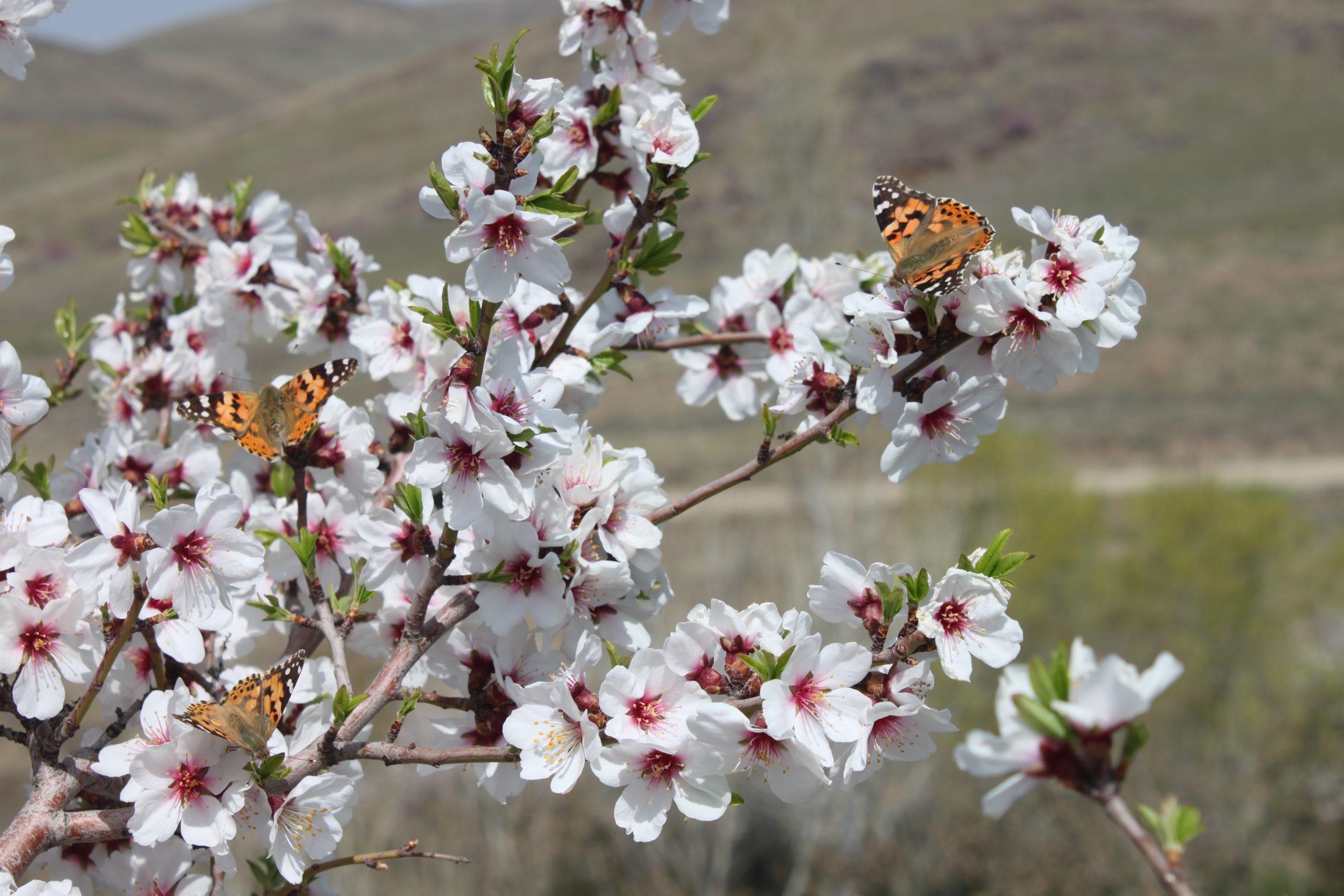 عکس روز/ طبیعت زیبای روستای همایون زنجان