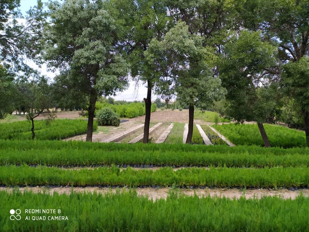 رئیس اداره جنگلکاری استان در گفتگو با «شهاب زنجان»: پای منفعت در میان است/ افزایش قیمت چوب دلیل منطقی و عقلانی برای برداشت غیرقانونی درخت و چوب از جنگل نیست