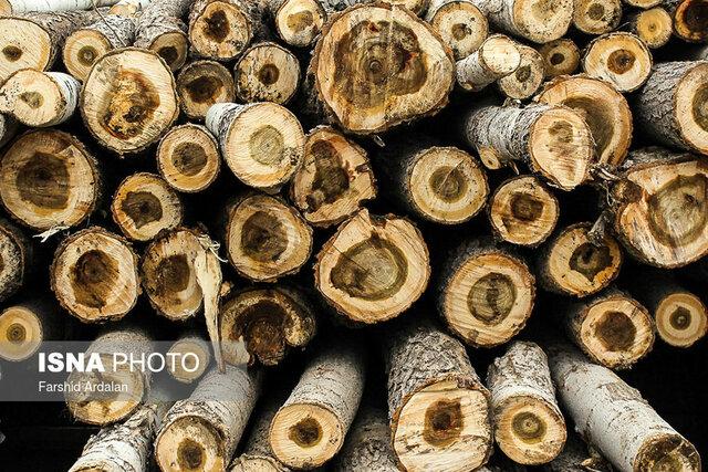 ۱۰۵ تن چوب آلات قاچاق در طارم کشف و توقیف شده است