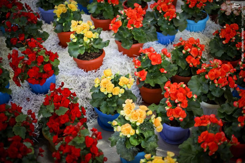 استعداد شکوفای زنجان در صنعت گل و گیاه