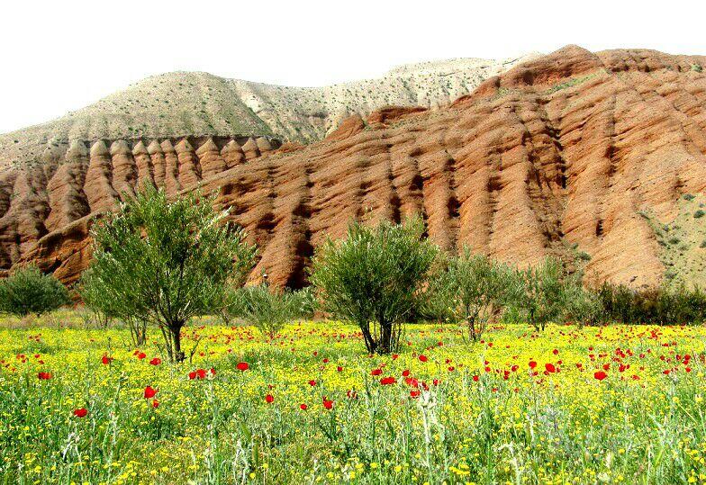 عکس روز / طبیعت زیبای طارم در یک روز بهاری